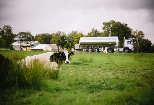 Collecte de lait en Normandie